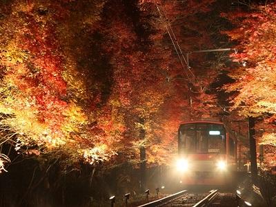 「もみじのトンネル」紅葉ライトアップ【期間延長】