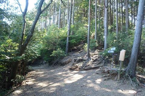 えいでんハイク No.353 二ノ瀬ユリ道から貴船山へ ―京都・北山を歩く―